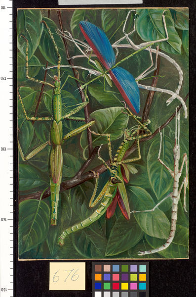676. Leaf-Insects and Stick-Insects.. © RBG KEW