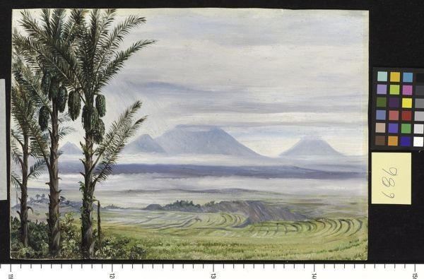 686. Volcanoes from Temangong, with Sugar Palms in the foregroun. © RBG KEW