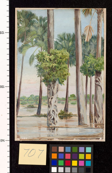 707. Palmyra Palms and Epiphytal Trees in Flood-time, Java.. © RBG KEW