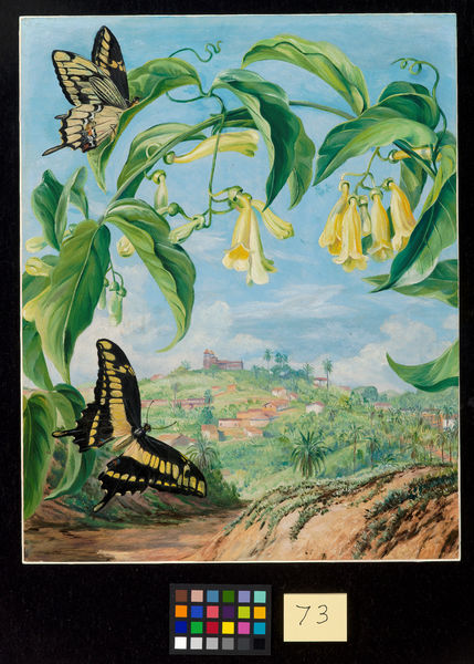 73. Yellow Bignonia and Swallow-tail Butterflies with a view of. © RBG KEW
