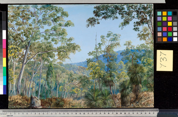 737. Gum Trees, Grass-trees, and Wattles in a Queensland Forest.. © RBG KEW