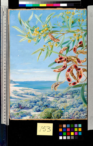 753. Various species of Acacia and other shrubs, good for bindin. © RBG KEW