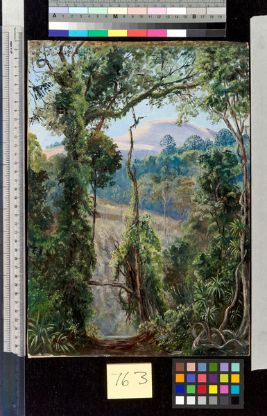 763. View, looking out of the Bunya Forest at the summit, Queens. © RBG KEW
