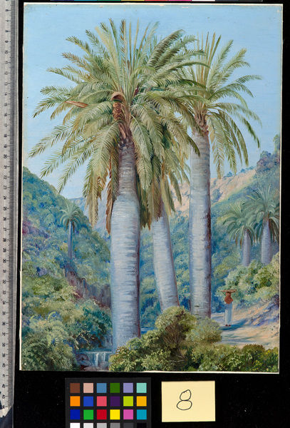 8. Chilian Palms in the Valley of Salto.. © RBG KEW