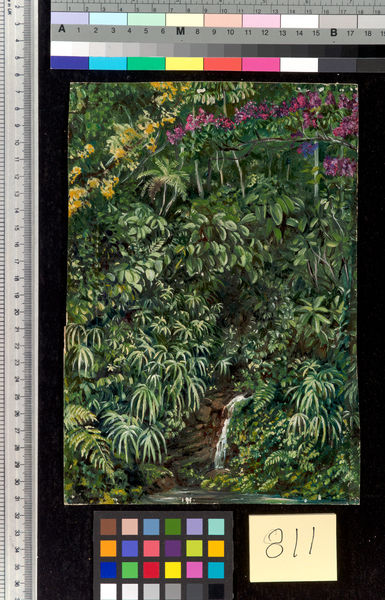 811. Glimpse in a Glen at Gongo, Brazil.. © RBG KEW