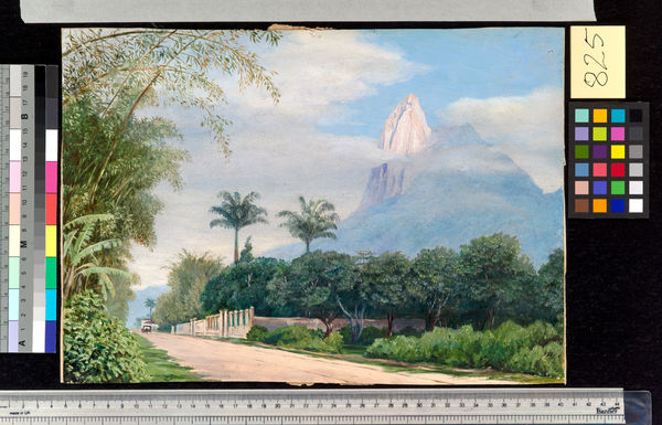 825. View of the Corcovado Mountain, near Rio de Janerio, Brazil. © RBG KEW
