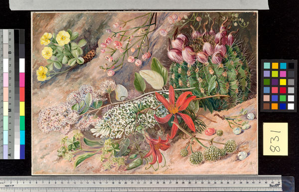 831. Wild Flowers and Fruits of the Salinas, Chili.. © RBG KEW