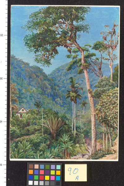 90. Glimpse of Mr. Weilhorn's House at Petropolis, Brazil.. © RBG KEW