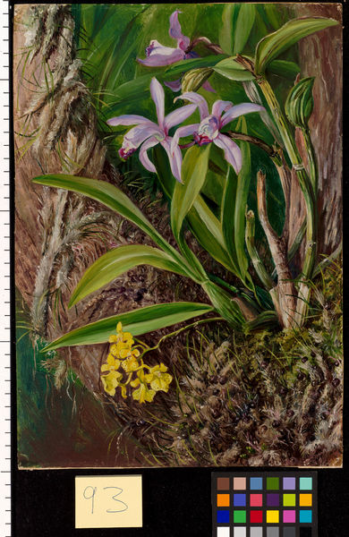 93. Brazilian Orchids and other Epiphytes. © RBG KEW