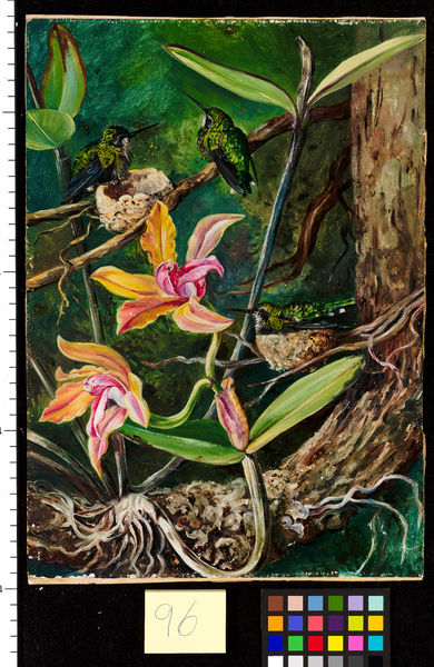 96. Orchid and Humming Birds, Brazil.. © RBG KEW