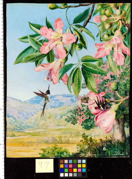 97. Foliage and Flowers of a Coral tree and double-crested Hummi. © RBG KEW