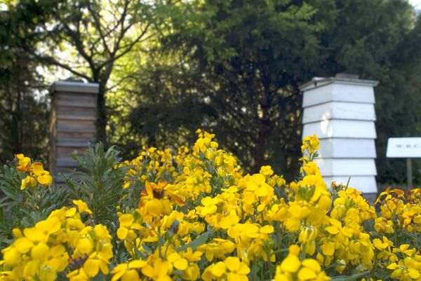 Bee garden at Kew. © RBG KEW