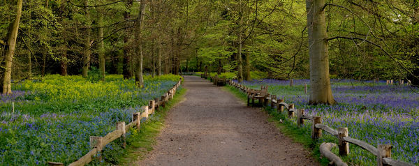 Bluebell wood, Queens cottage grounds,Kew. © RBG KEW
