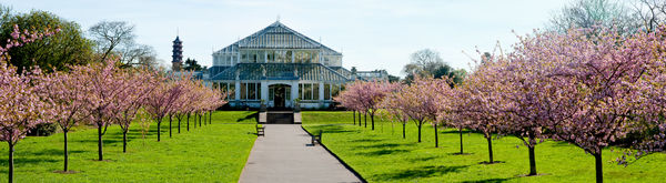 Cherry walk Panorama with the Temperate house. © RBG KEW
