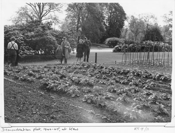 Garden visitors inspect the Demonstration Plot at RBG Kew, during WWII. © RBG KEW