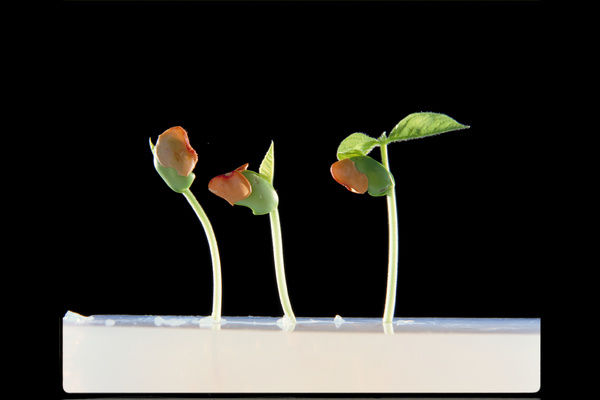 Germination and growth of seeds. © RBG KEW