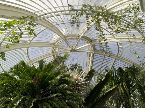 Glasshouses. © RBG KEW