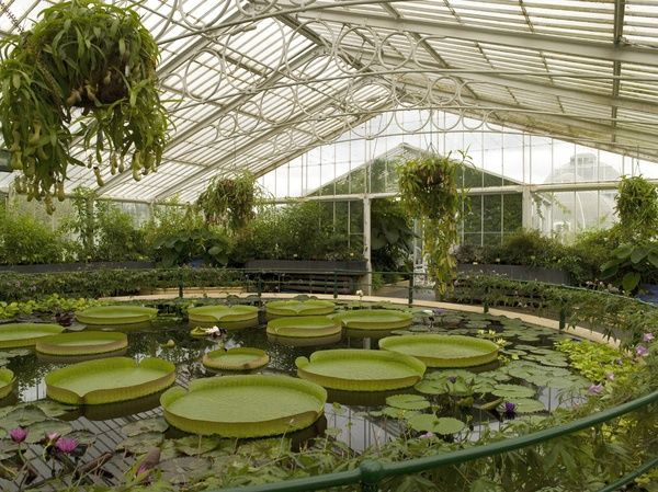 Interior of the Waterlily House. © RBG KEW