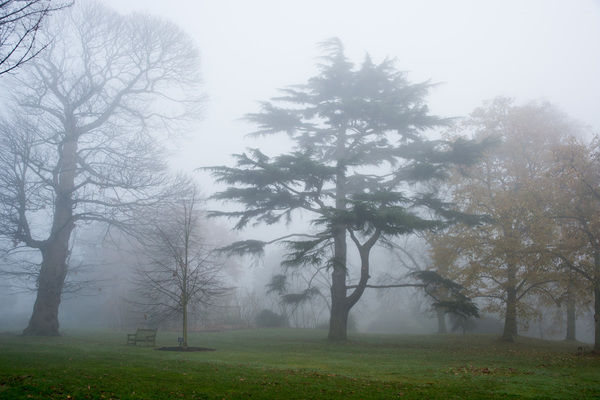 Kew Gardens in the mist. © RBG KEW