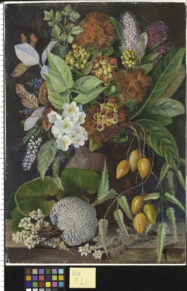 New Zealand Flowers and fruit Marianne North Painting 721 . © RBG KEW