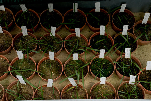 Orchid Seedlings. © RBG KEW
