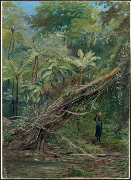 Painting 056, View under the Ferns at Gongo, Brazil. © RBG KEW