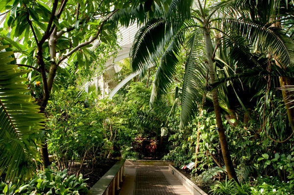 Palm House Interior. © RBG KEW
