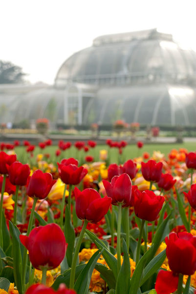 Palm House in spring. © RBG KEW