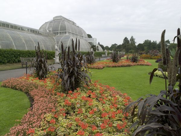 Palm House in summer. © RBG KEW