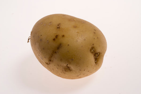 Potato. © RBG KEW