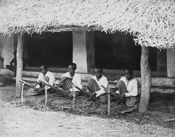 Preparing cinnamon quills for drying, Sri lanka, 1880's. © RBG KEW