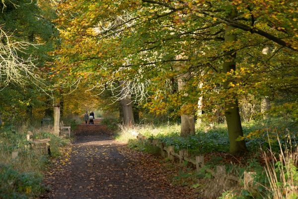 Queens cottage grounds in Autumn. © RBG KEW