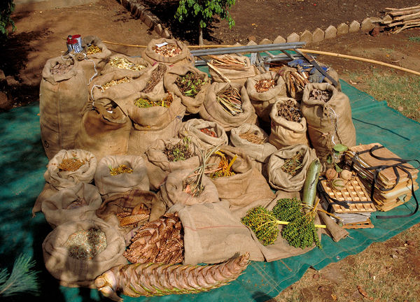 The result of three days seed collecting in SW. Burkina Faso. © RBG KEW