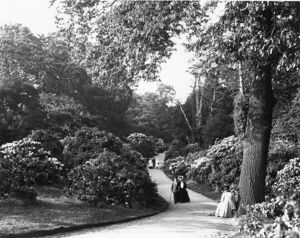 The Rhododendron Dell, Kew Gardens. © RBG KEW