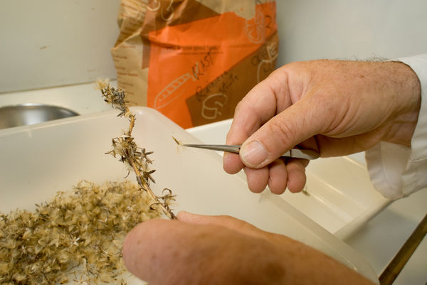 Seed sorting and cleaning. © RBG KEW