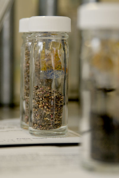 Seeds in jars ready for banking. © RBG KEW