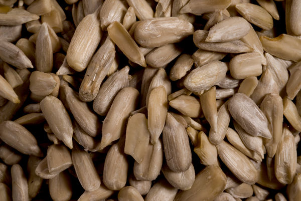 Sunflower seed. © RBG KEW