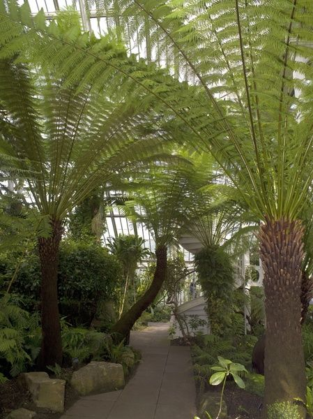 The Temperate House. © RBG KEW