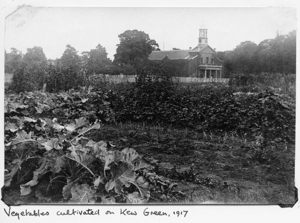 Vegetables cultivated on Kew Green, 1917. © RBG KEW