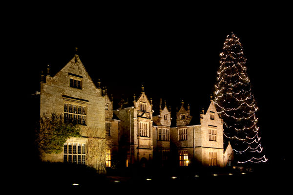 Wakehurst Mansion and Christmas Tree at night. © RBG KEW