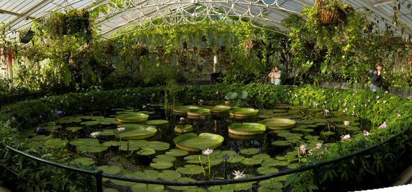 Water Lily house interior. © RBG KEW