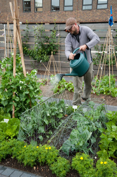 Watering a vegetable plot. © RBG KEW