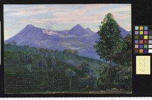 622. Another View of Papandayang, with Jak fruit Tree in the for