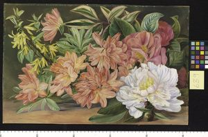 Marianne North (Selection of 943 Items)