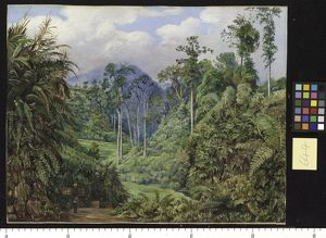 644. A Clearing in the Forest of Tji Boddas, Java, with bank of