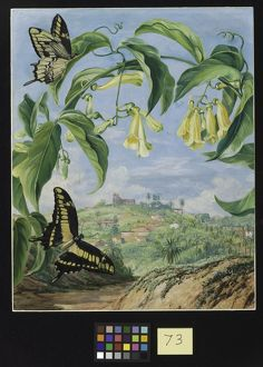 73. Yellow Bignonia and Swallow-tail Butterflies with a view of