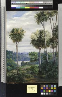 754. View of Melbourne, from the Botanic Gardens.