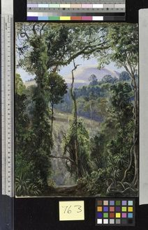763. View, looking out of the Bunya Forest at the summit, Queens