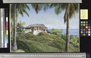 820. Spring Gardens, Jamaica, with its Cocoanut Palms.