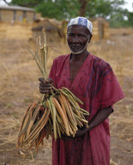 African tribesman holding Parkia biglobosa seed pods